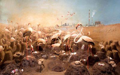 AIR WATER LOVE – A Dialogue Between Chinese and Australian Women Artists